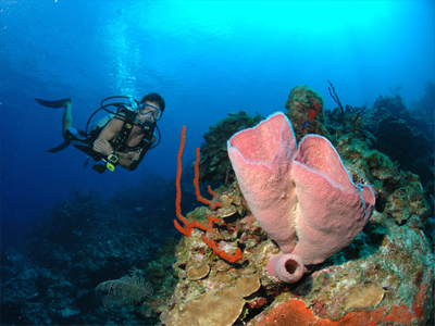 St Thomas Diving charter